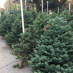 enchanted forest christmas trees enchanted forest trees trees 444 w alma ave willow glen san jose ca