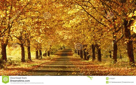 pathway pictures pathway in the fall royalty free stock photography image