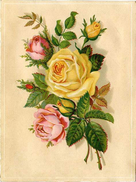 vintage images vintage stock images yellow and pink roses the