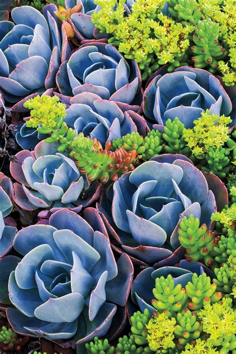 how to care for succulents diy network blog made remade diy