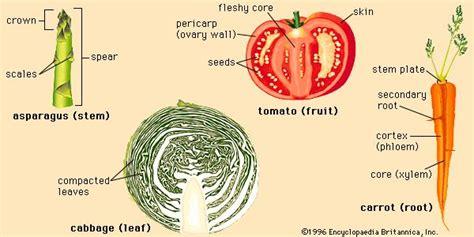 vegetable food britannica com