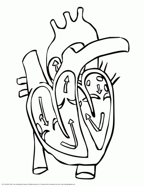 Human Anatomy Coloring Pages Coloring Home Human Coloring Page