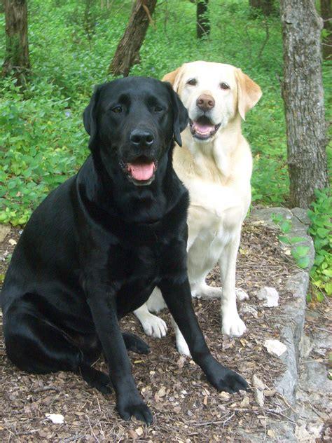 Big Black black dogs reading with rhythm