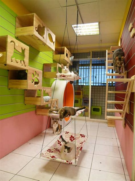 Cat Room Ideas by Catswall A Modular Cat Climbing Wall For You Pet