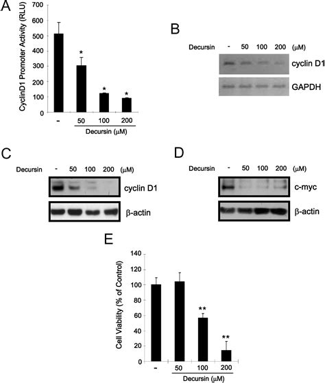 bcas2 promotes prostate cancer cells proliferation by decursin suppresses human androgen independent pc3