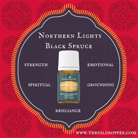 northern lights black spruce essential oil norther lights black spruce archives the oil dropper