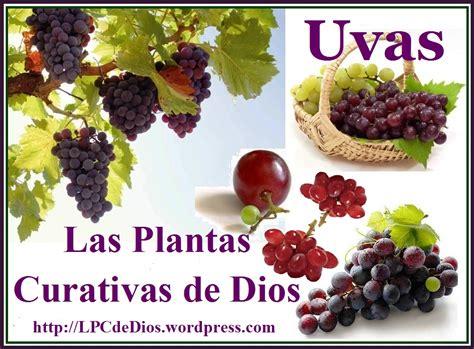 imagenes graciosas uvas uvas y sus beneficios para la salud las plantas