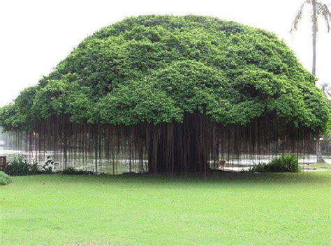 pictures of trees 25 different types of trees and their uses styles at