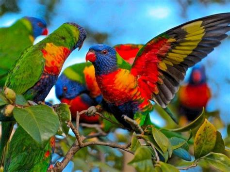 colorful parrots 55 bird colorful parrot hd wallpapers