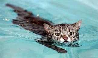 Kitten Swimming In Bathtub Cats Taking A Swim Katliterary