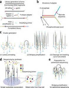illumina ngs sequencing overview of ngs technology using illumina technology as an