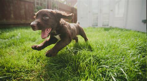 dog run baby animals wallpapers hd desktop  mobile