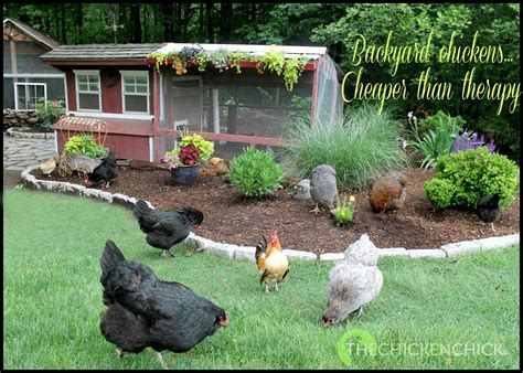backyard chcikens farm country radio interview with the chicken chick