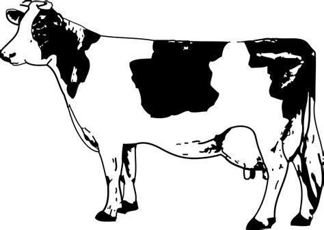 cow clipart cow clip free clipart of cows calfs