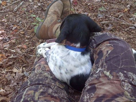 turkey dogs there s bird dogs then there s turkey dogs no more running time to fly