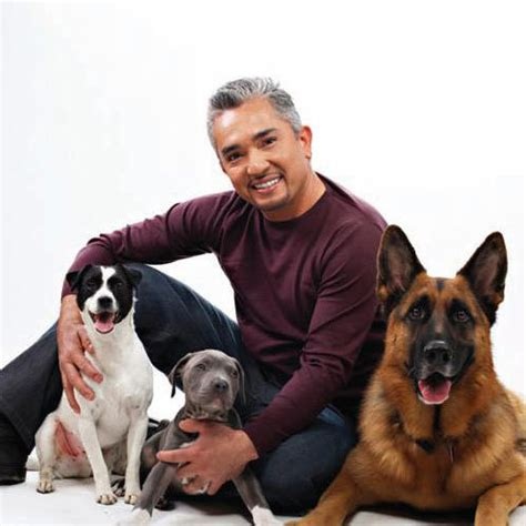 whisperer with cesar millan whisperer season with cesar millan