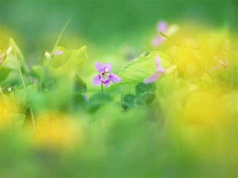 flower wallpaper effect dreamy violet flowers in soft blurry background 1920 1600