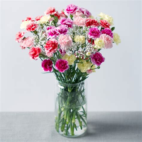 spray cascade spray carnations bouquet bunches co uk