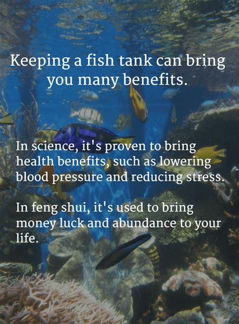 benefits of aquarium fish tanks decoration fish tank best benefits of a fish tank and the science feng shui behind it