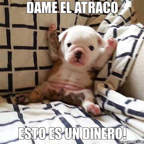 imagenes de memes muy chistosas memes de perros graciosos con chistes muy divertidos