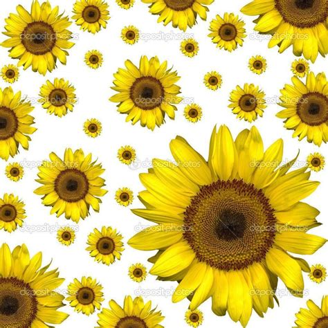 sunflowers background sunflower backgrounds wallpaper cave