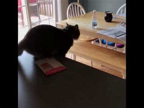 how to stop cats jumping on kitchen bench cat kitchen table jump fail youtube
