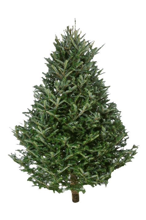 different types of christmas trees with pictures and