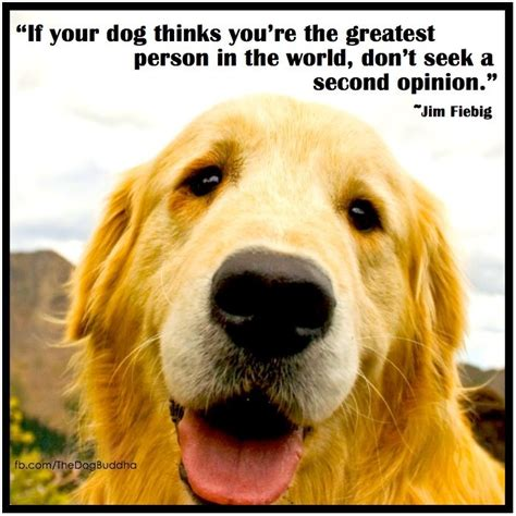 Golden Gib 208 best must dogs images on cutest