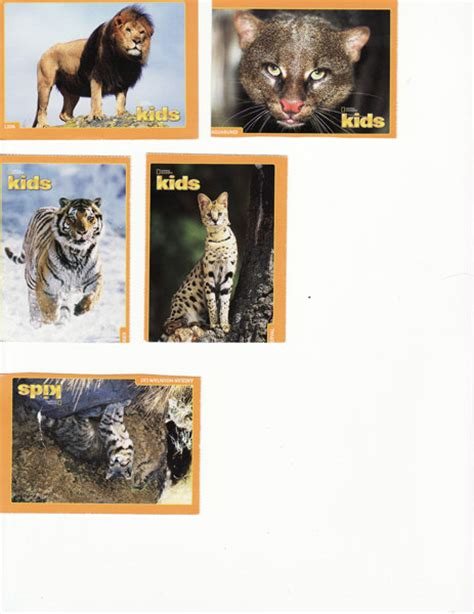 National Geographic Cards - free 6 national geographic trading cards big cats