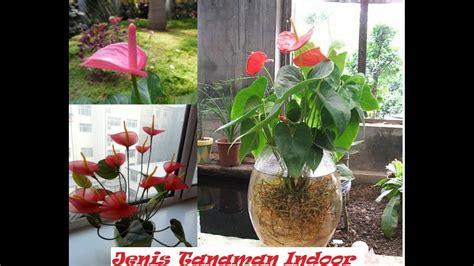 aneka macam tanaman hias indoor perawatan mudah youtube