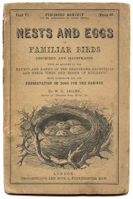 antique ephemera printable nests  eggs title page