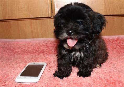 black fluffy black fluffy dogs