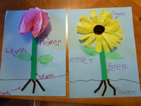 plant crafts for what you need