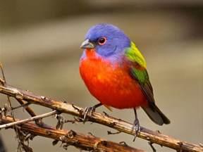 best birds outside my window