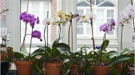 garden orchids and roses auf pinterest orchideen dfte gr 252 ner daumen orchideen so pflegen sie die k 246 nigin der