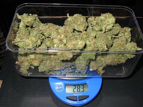 how much weight can a massage table how many joints are in an ounce of weed