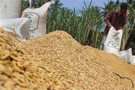 Timbangan Gabah petani resah karena potongan timbangan komisi iii dprd luwu utara akan panggil dinas koperindag