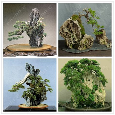 bonsai rock garden buy wholesale indoor rock gardens from china indoor