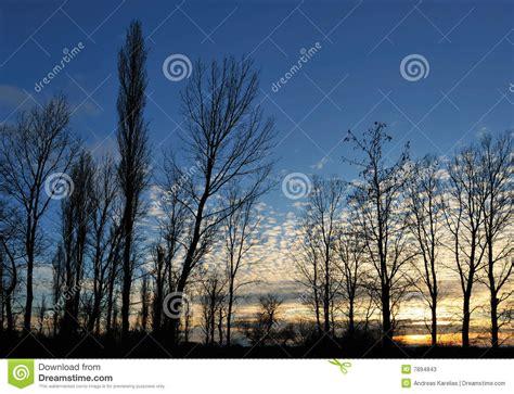 alberi illuminati alberi illuminati immagine stock immagine di dusk sole