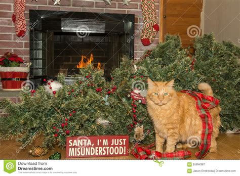 cat destroys christmas stock image image of elegant