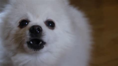 coco dog coco dog youtube