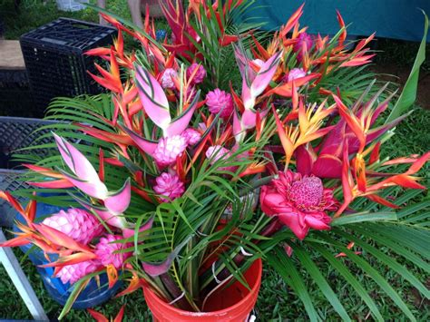 Flowers For Sale by Tropical Flowers For Sale At Kauai Seascapes Nursery