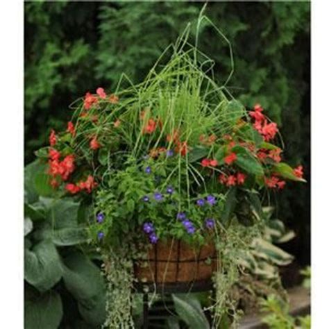 container gardening pdf 17 best images about hanging baskets on