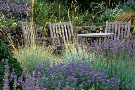 ornamental grasses capture attention with easy beauty