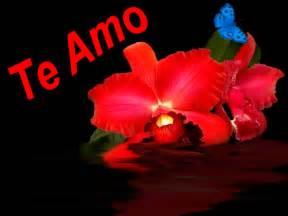 imagenes de rosas te amo te amo con flores bonitas animadas con movimiento