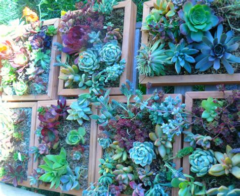 Custom Order For Carie Living Wall Art Kit Vertical Garden Vertical Wall Garden Kits
