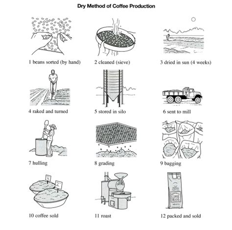 The Illustrations Below Show How the illustrations below show how coffee is sometimes produce testbig