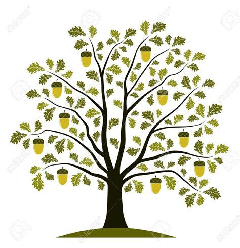 clip tree oak seed clipart clipground
