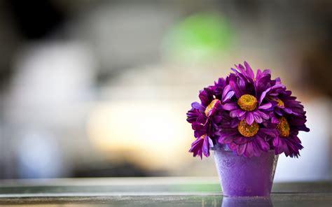 Wallpaper Flower Pot | beautiful purple daisy flower pot macro photography