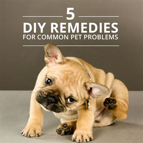 More Home Remedies For Common Problems 2 by 5 Home Remedies For Common Pet Problems Home